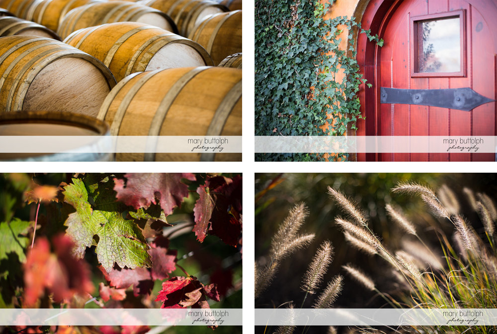 Scenes from the vineyard from wine barrels to grapevines at Anyela's Vineyards Wedding