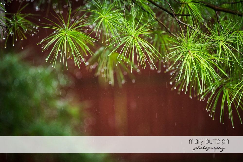 Plants capture the raindrops at the Sherwood Inn Wedding