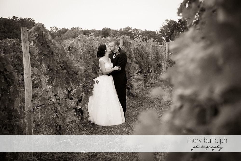 Couple kiss at the vineyard at Anyela's Vineyards Wedding