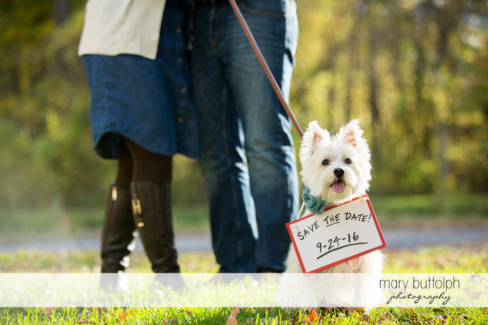 Couple's wedding date is announced by their pet dog at Erie Canal Engagement