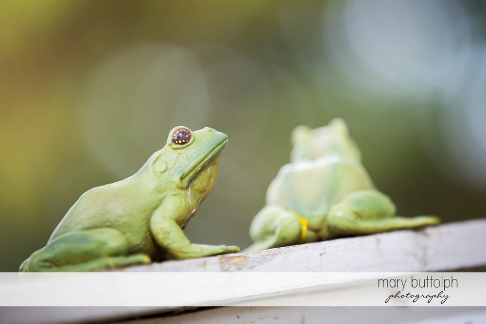 Close up shot of frogs at Frog Pond Bed & Breakfast Wedding