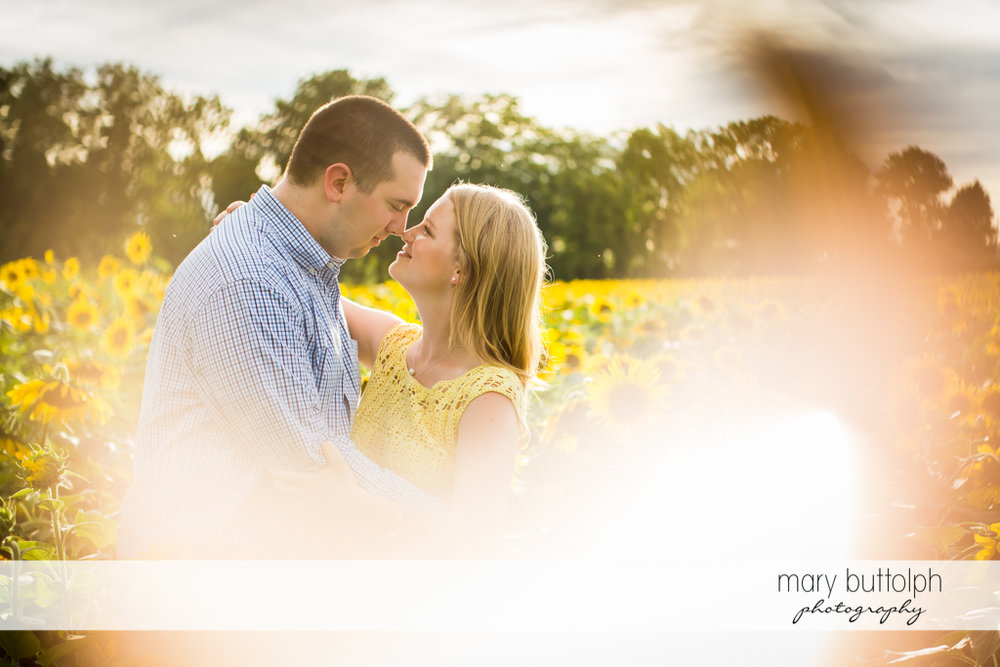 Couple spend time together with sunflowers at Syracuse Engagement