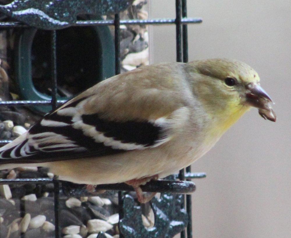 good feeder