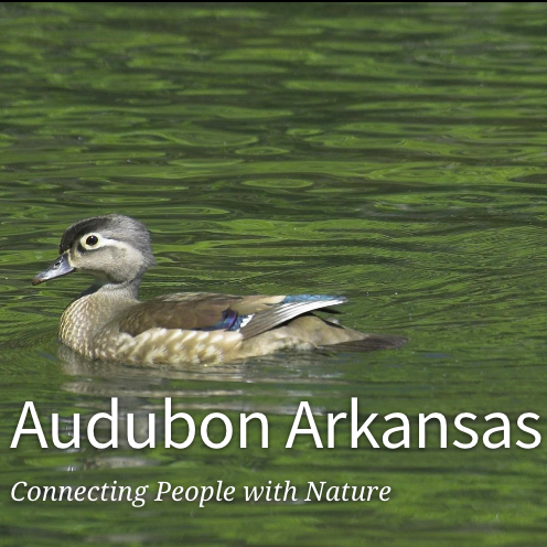 Audubon Arkansas Society