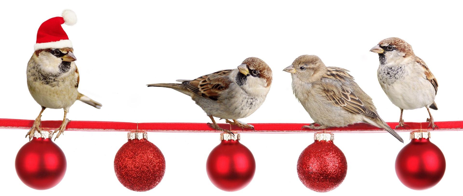 Christmas Bird.Calendar Hsv Audubon