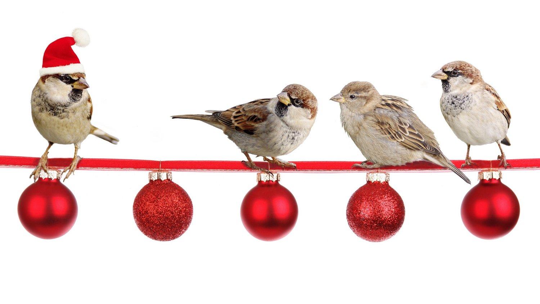 Audubon Christmas Bird Count 2019 Christmas Bird Count 2019 — HSV Audubon