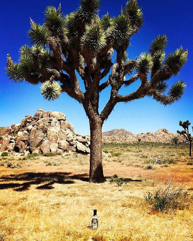 First Ascent Whiskey has been traveling. We love it when customers send in photos. This is from Andy while traveling to the Joshua Tree National Park. * * * #wemakethingshappen #travelinglife #travelingspirits #craftspiritsrevolution #optoutside #exploretheworld #nationalparks #tourtheworld #micraftspirits #distillerylife #agriculturist #treestagram #joshuatree #treeoflife #nationalparks