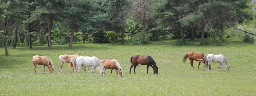 Our Equine Staff Come To Us From A Wide Variety Of Backgrounds Retired Show Horses And Race Backyard Buddies Family