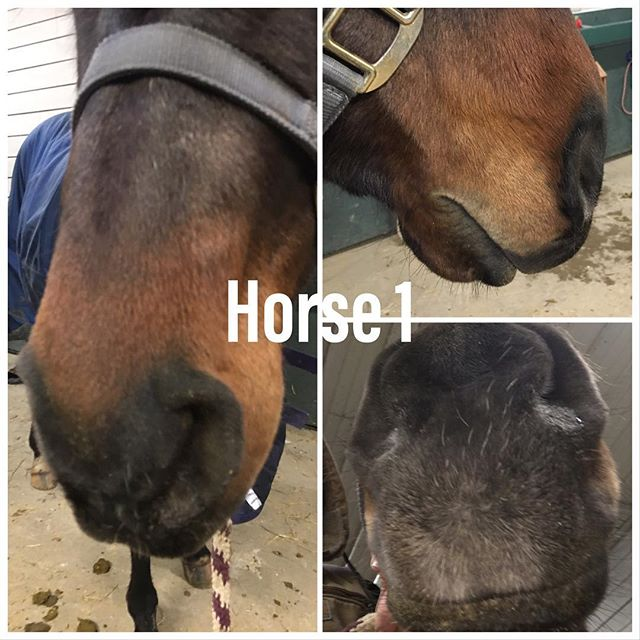 Pop quiz!! Since everybody has been doing e-learning we decided to get in on the fun.  Who knows whose nose??