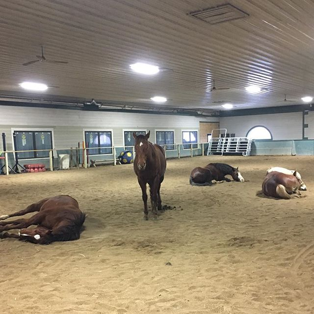Apparently everyone gave it their all today for Equestrian Club 😴. #teamred #tiredponies #workhardresthard 😂