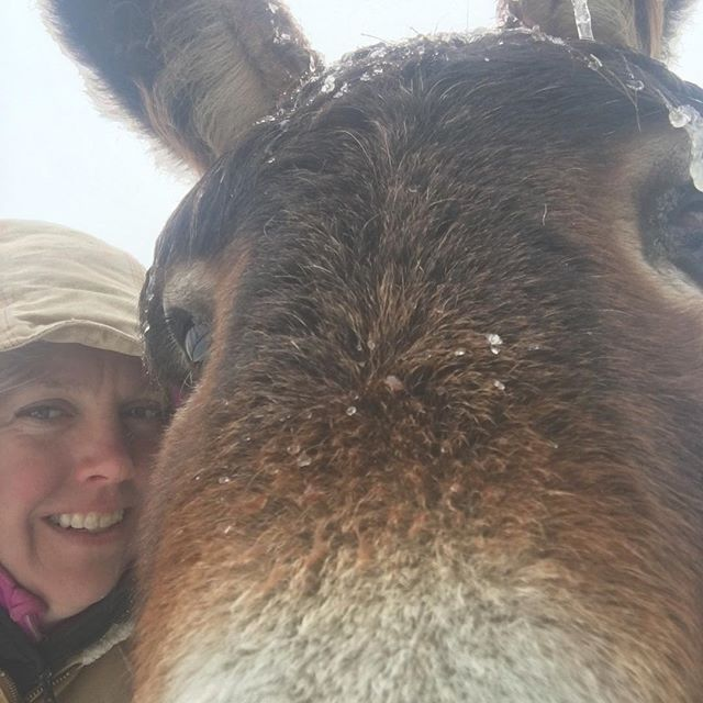 """""""Get adopted they said, get your own people they said"""". Diego is a good sport about all this winter weather.  He grew up in the back country of very southern Arizona for the first six years of his life, this polar vortex crap isn't his idea of fun 🌄🔆🌵🌵 #blmburro #selfie #brrr #donkeytherapy"""