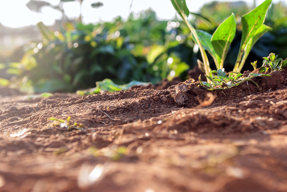 Landscape Supply: Key Differences Between Garden Soil and Topsoil Colts Neck, NJ