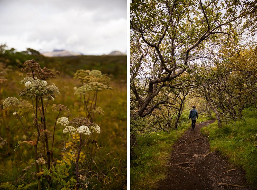 Iceland1-58 copy.jpg