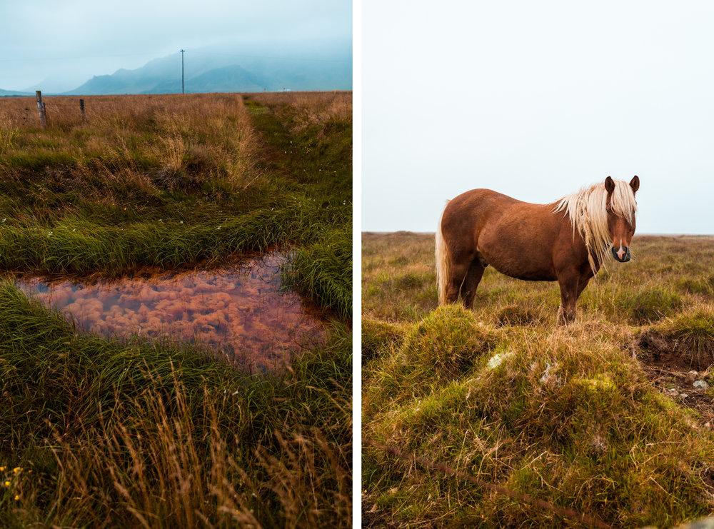 Iceland2-33 copy.jpg