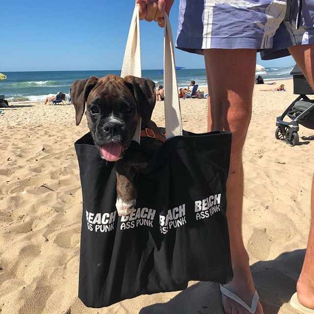 New for Summer BAP Canvas Puppy Totes! (And beach bags) @muddythesailordog not included BYO Puppy #beachasspunk #summer #beach