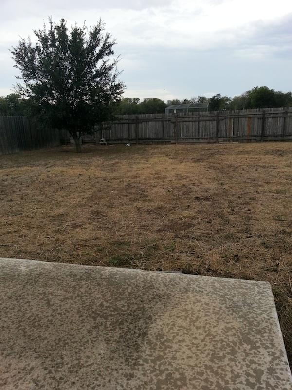 Brandi Backyard.jpg