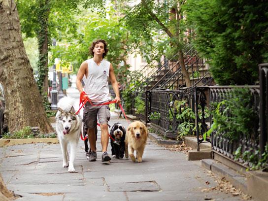 08-new-york-dog-fsl.jpg