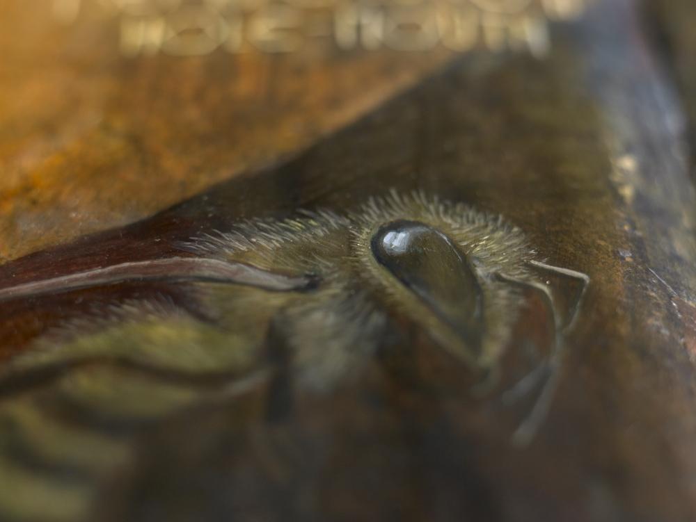 Buckfast-Splendor 31301.jpg