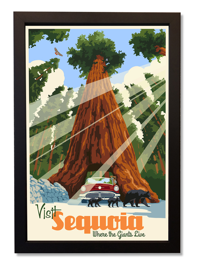 Sequoia by Steve Thomas
