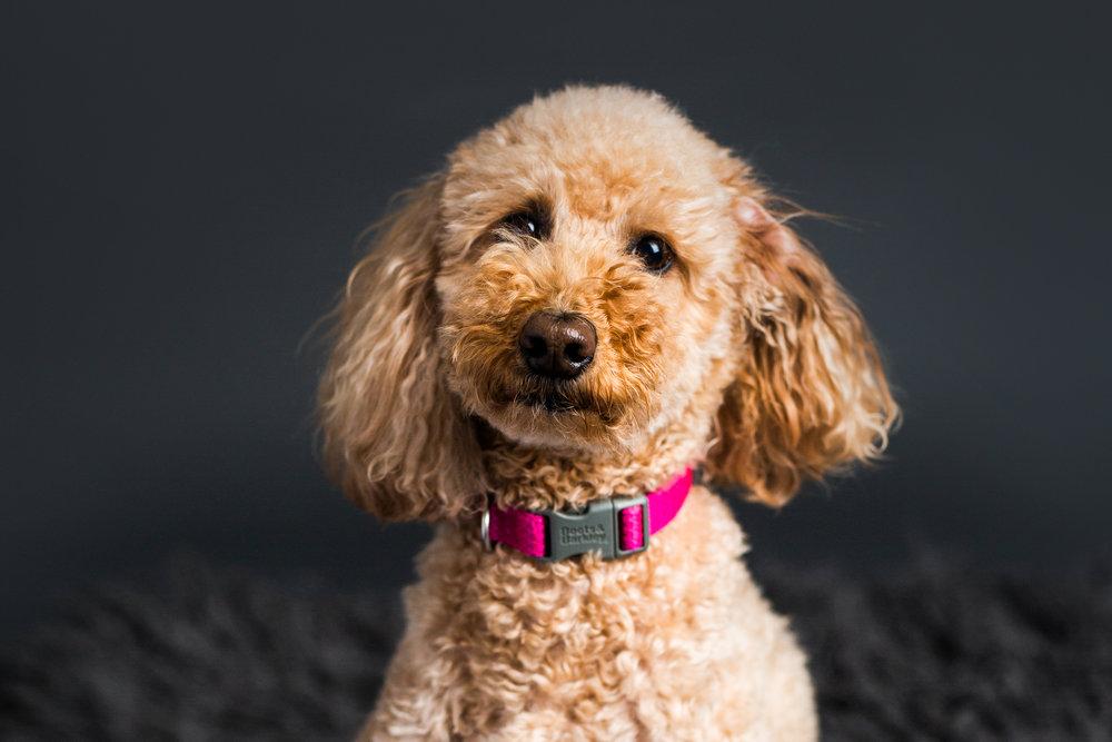 Seattle Pet Photographer 2019-5.jpg