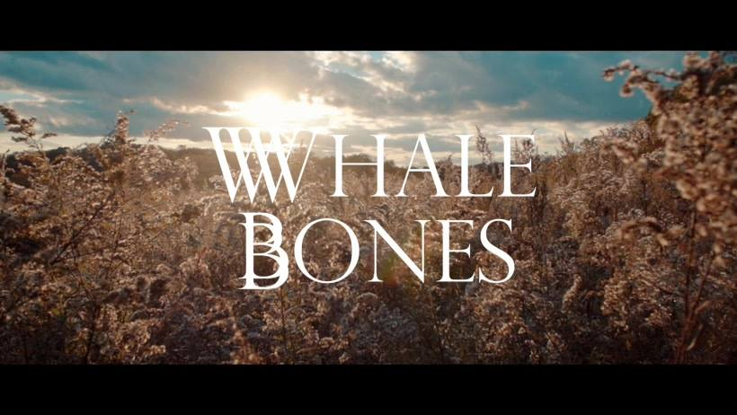 WHALE BONES // BACKYARD - Indiana based alternative indie rock band Whale Bones have recently released a music video for their latest single,