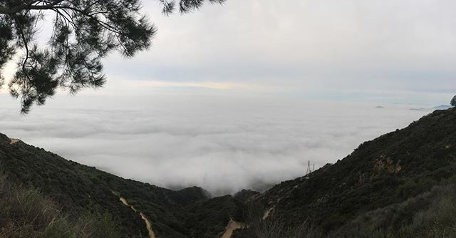 View from Henninger Flats, way way above cloud level #hiking #altadena #mountwilson ⛺️