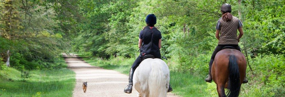 horse-back-riders.jpg