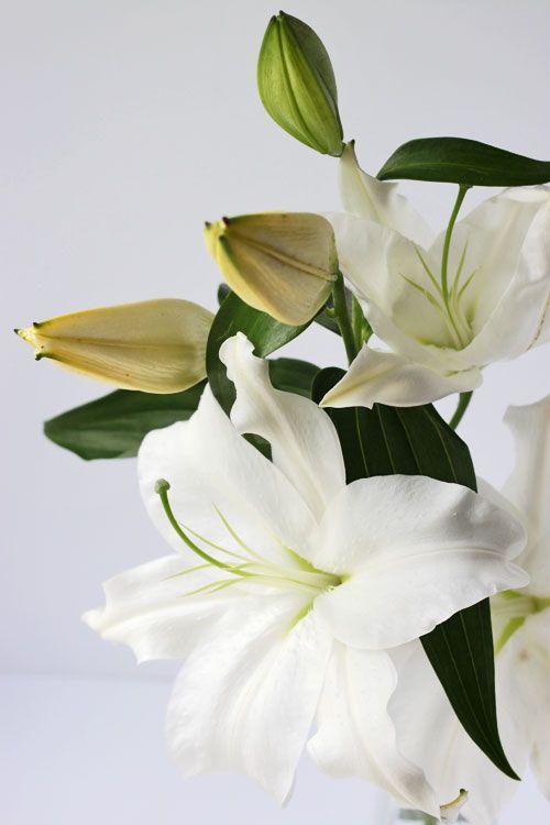 Flower deliveries bairnsdale oriental lillies mightylinksfo
