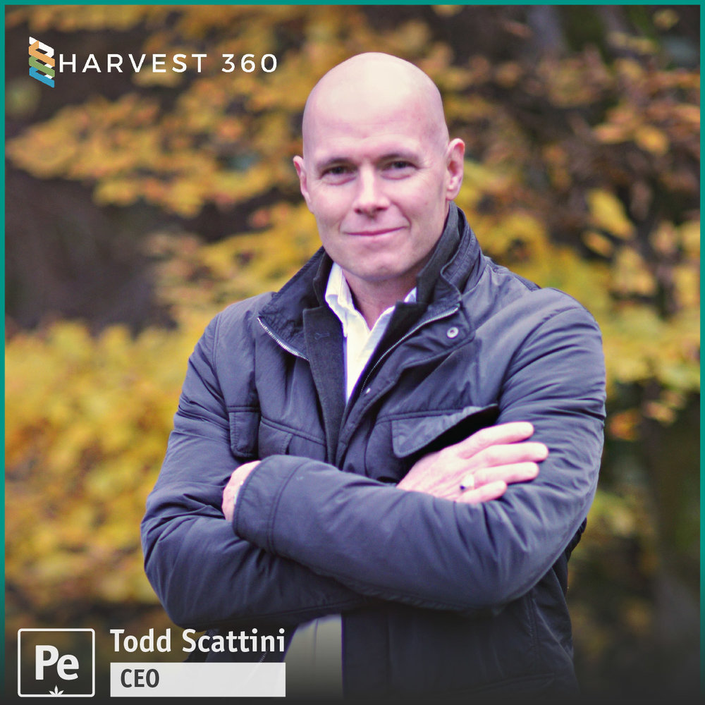 Todd Scattini, CEO of Harvest 360, an international cannabis firm and on the Board of Veterans Cannabis Project.