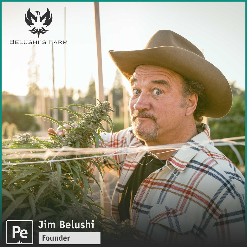 Jim Belushi on growing cannabis and starting Belushi's Farm