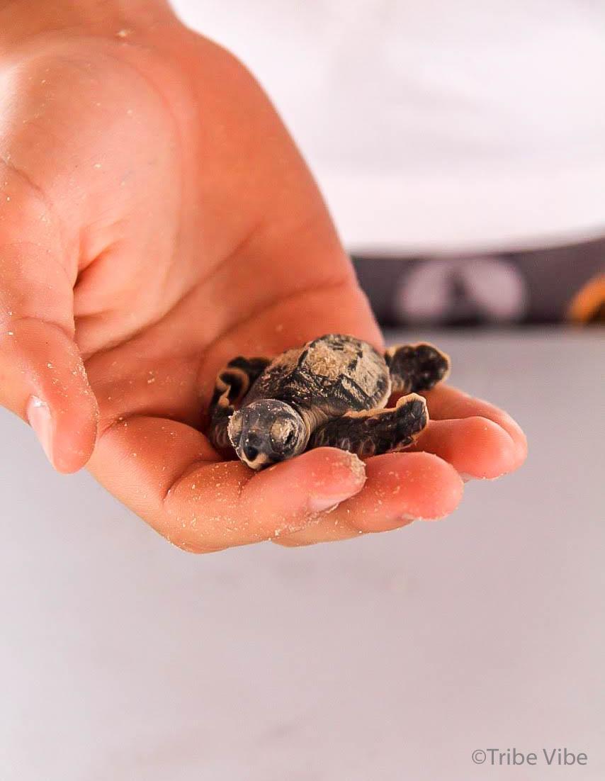 baby turtles7.jpg