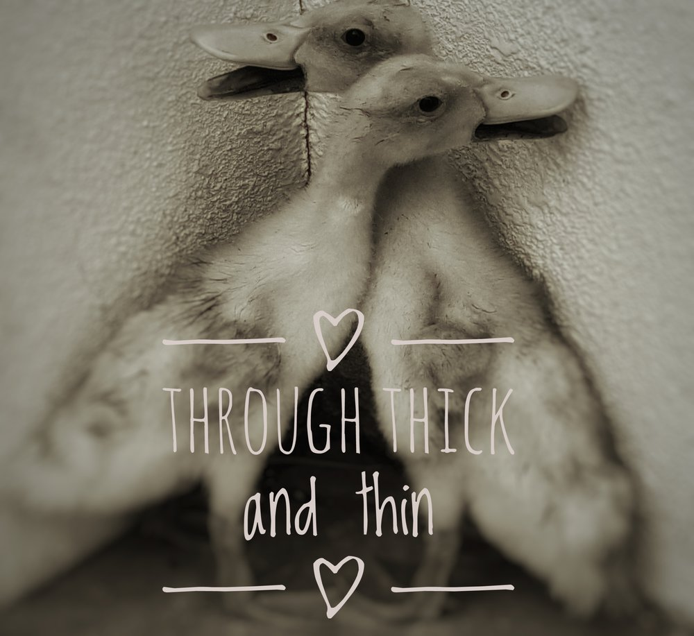 ducks 1_edited.jpeg