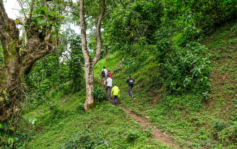 Machame walking trail to the bridge 7, Kilimanjaro.jpg
