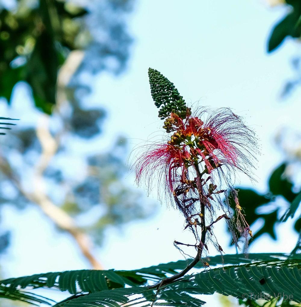 Kilimanjaro flowers 9.jpg