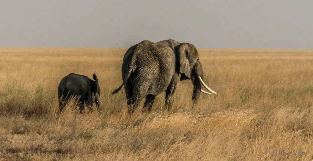 elephants-16.jpg