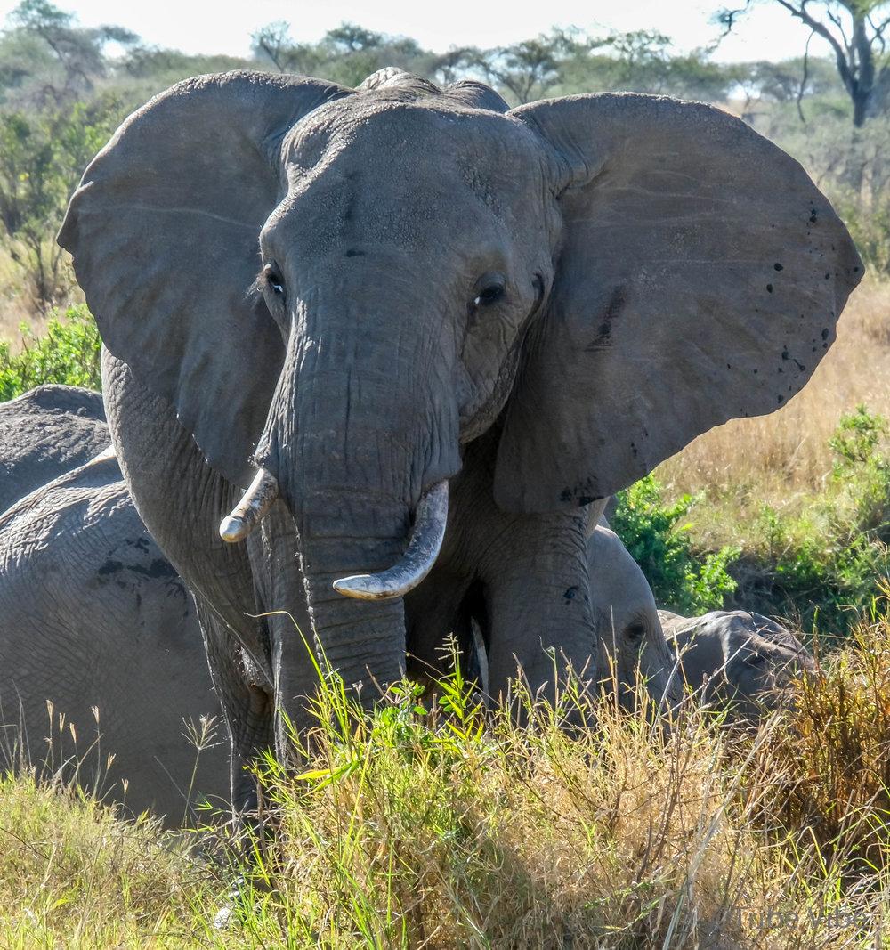 elephants-22.jpg