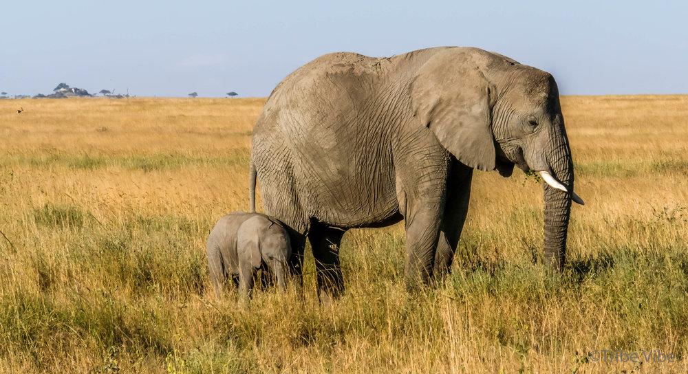 elephants-28.jpg