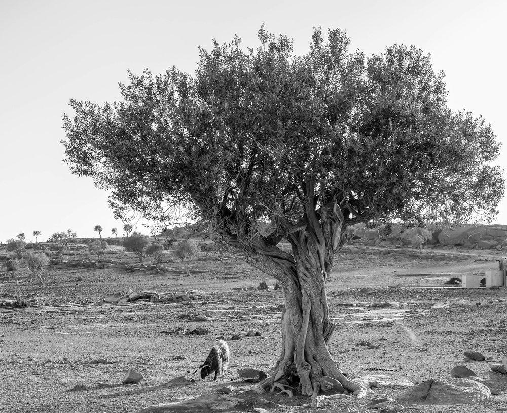 trees5.jpg