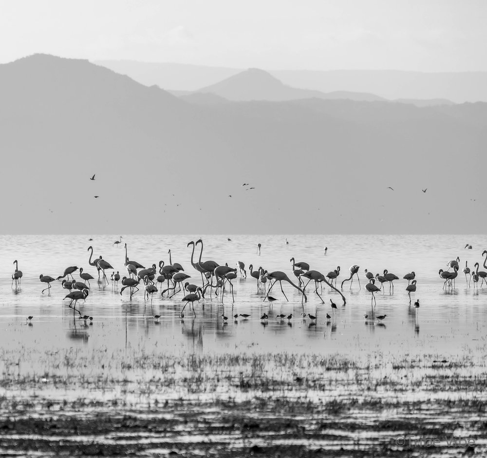 Lake Manyara birds, Tanzania31.jpg