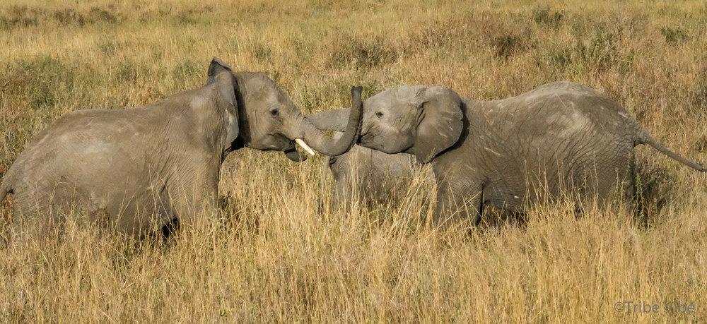 elephants-14.jpg
