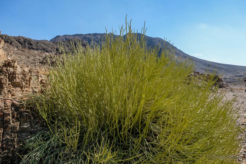 14 vegetation in the wadi.jpg