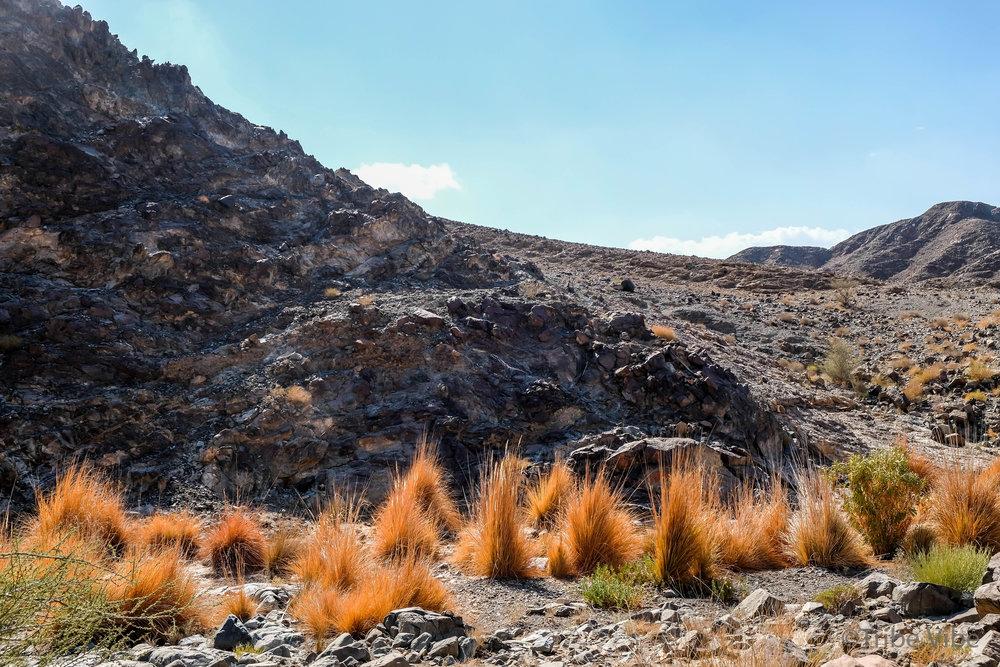 16 vegetation in the wadi.jpg