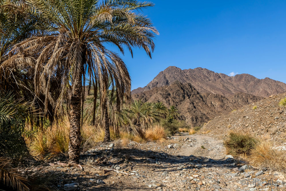 Strangely beautiful landscapes. Hiking in the UAE