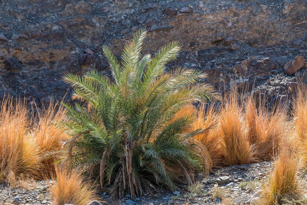23 vegetation in the wadi.jpg