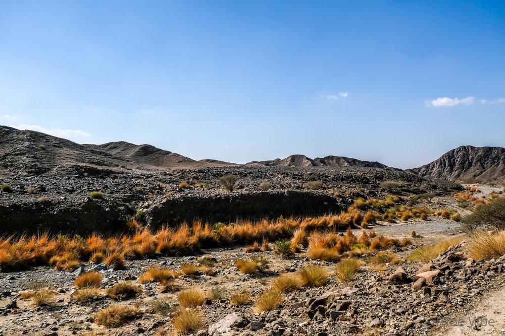 Desert scrub looks like fire in the wadi