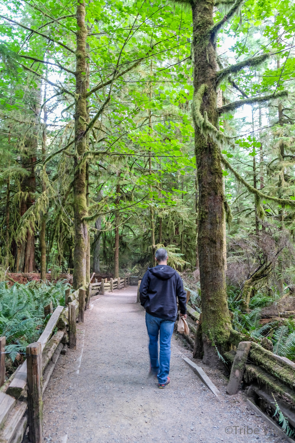 cathedral grove12.jpg