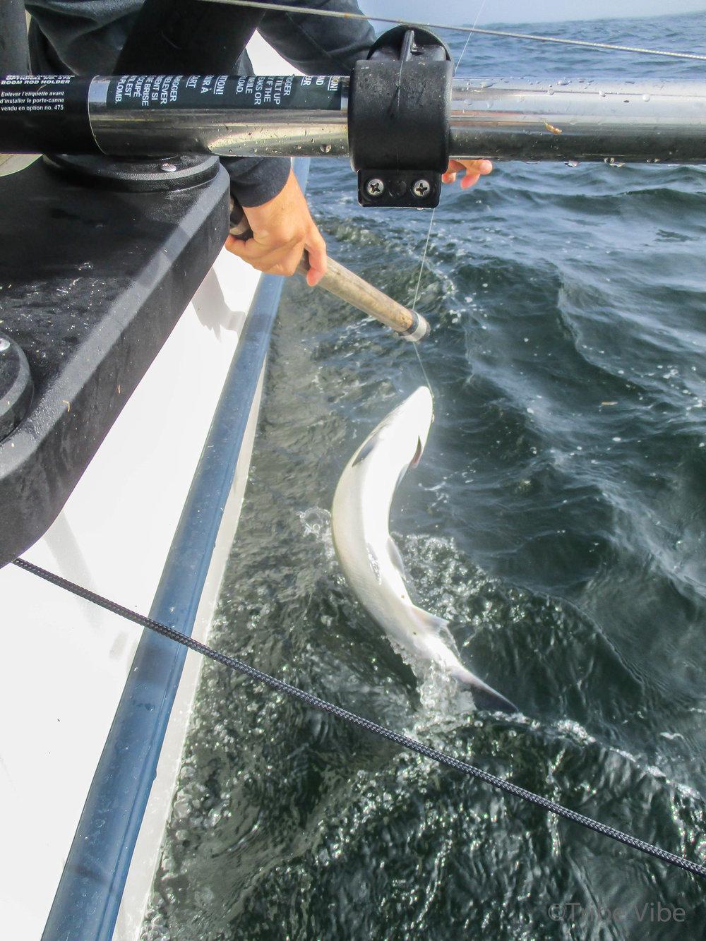 tofino fishing30.jpg