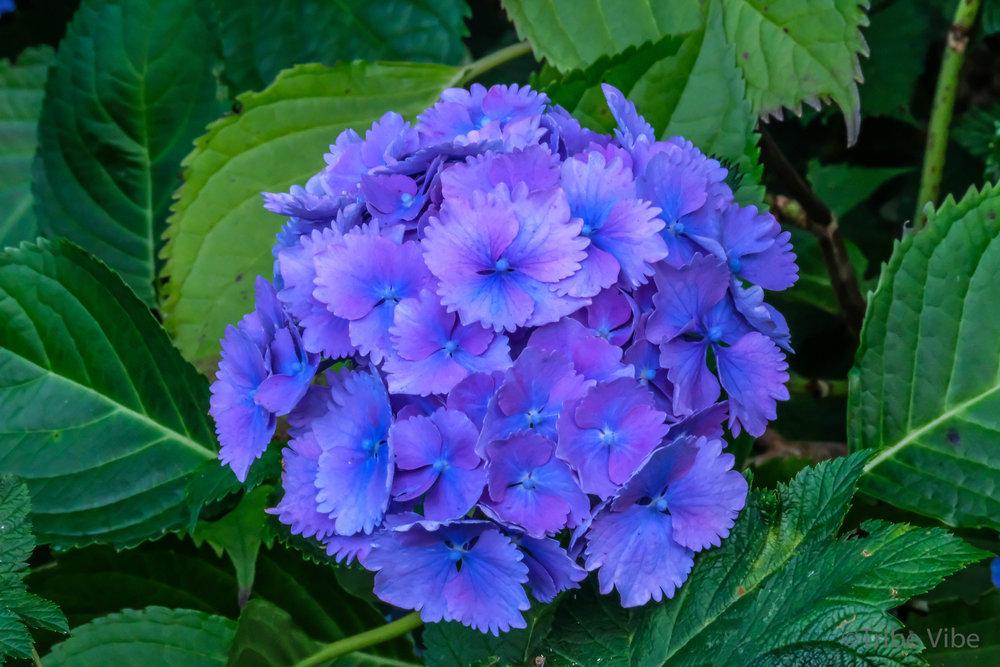 tofino flowers5.jpg
