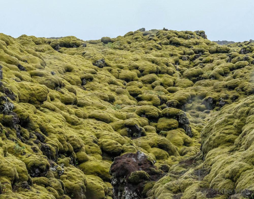 Eldhraun lava field 19.jpg