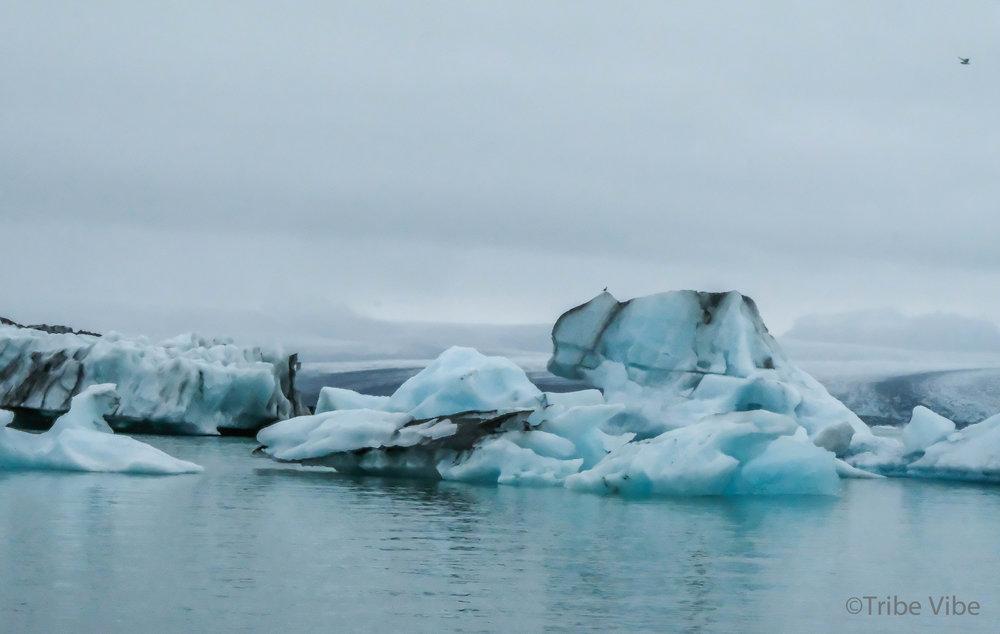 Jokulsarlon Glacier Lagoon 38.jpg